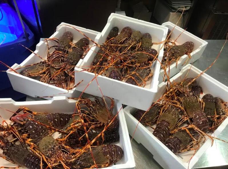 Aragoste calabresi della secca di Amendolara