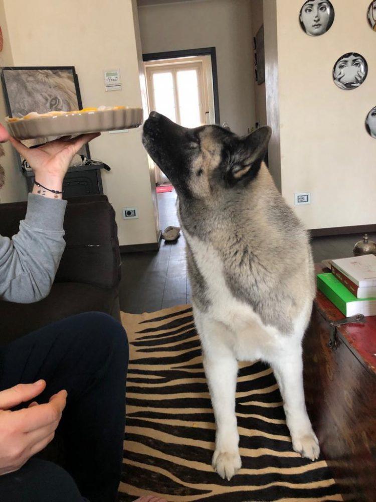Nanuk, il cane di casa Boer