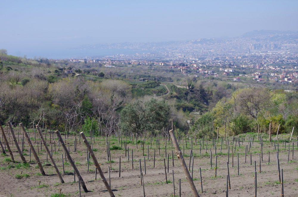 Cantine Olivella - Nuovi impianti e terrazzamenti