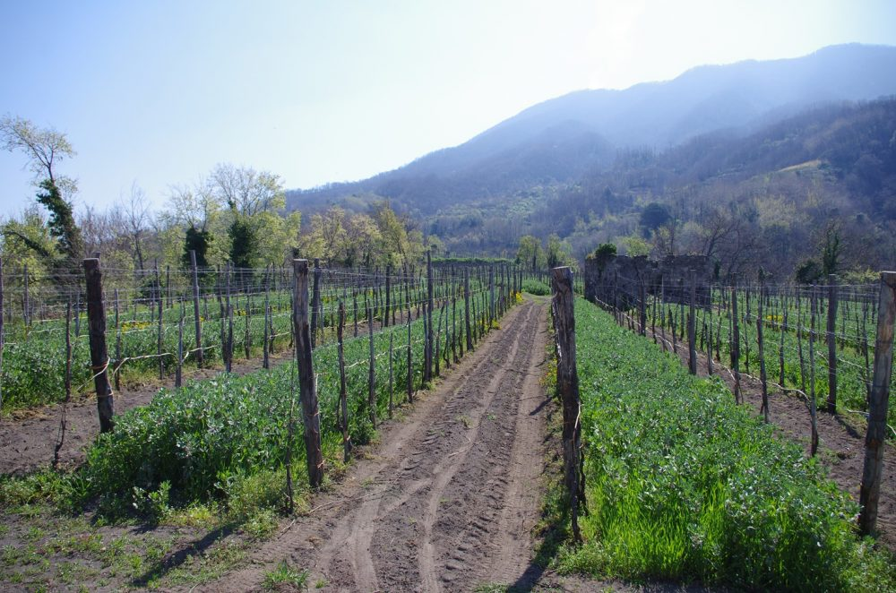 Cantine Olivella - Vigneti a regime biologico