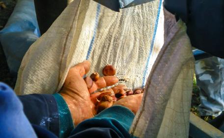 La lavorazione della mosciarella