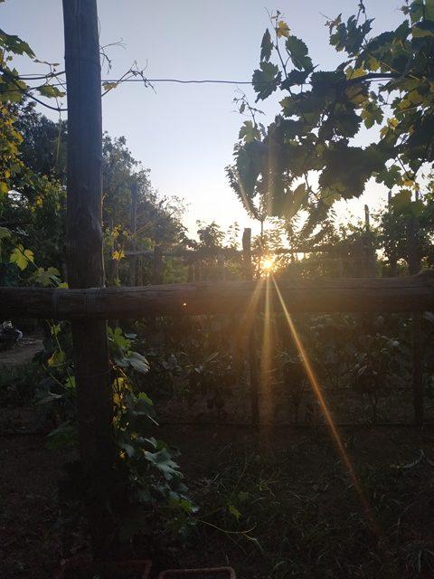 L'orto al tramonto