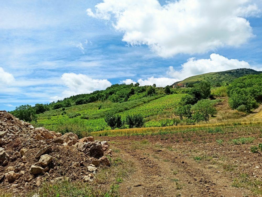 Azienda Agricola Coletta - uno degli oliveti