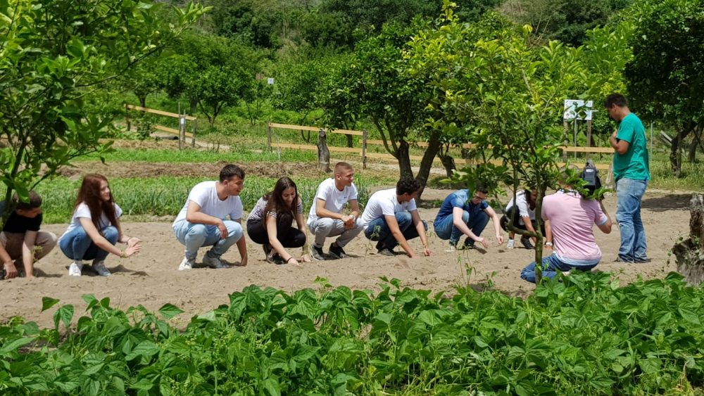 Intenti a piantare semi di pomodoro cannellino dei Campi Flegrei