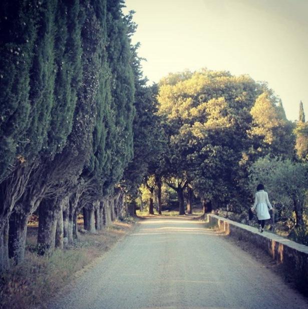 Viale di cipressi e lecci - Castello La Leccia