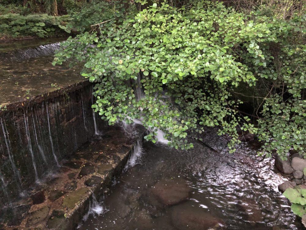 Barbatella - fiume
