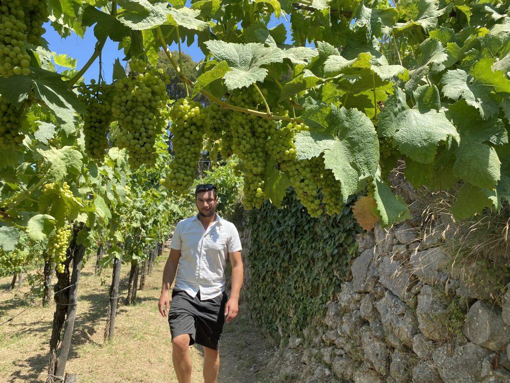 Chalet Azzurro Capri - Giovanni Piccirillo, enologo - Piccirillo winemakers