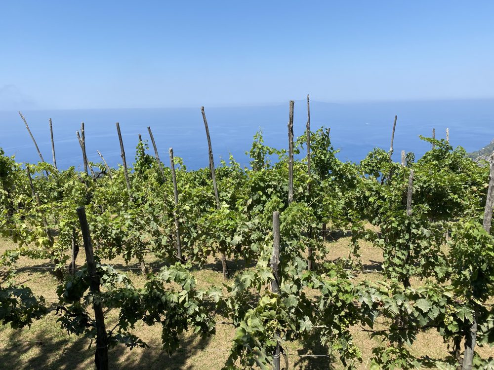 Chalet Azzurro Capri - vigneto
