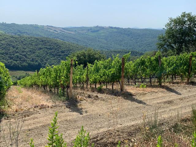 Albatreti a Montalcino