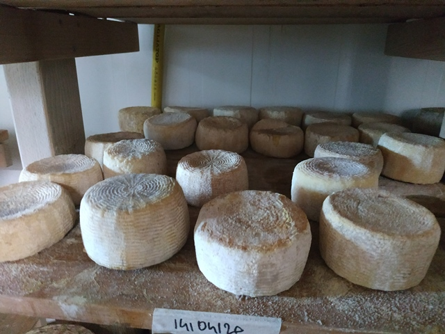 Agricola San Maurizio- i formaggi stagionati