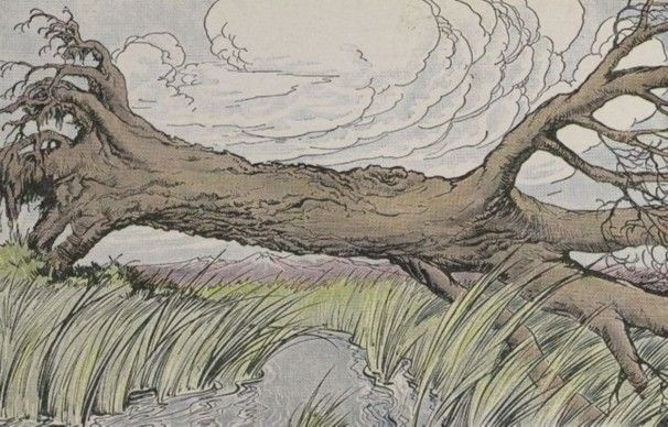 La quercia e le canne
