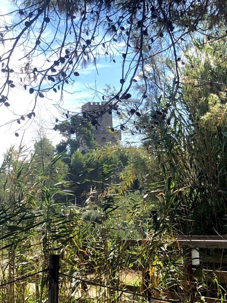 Torre di Cerrano 1568 a Pineto
