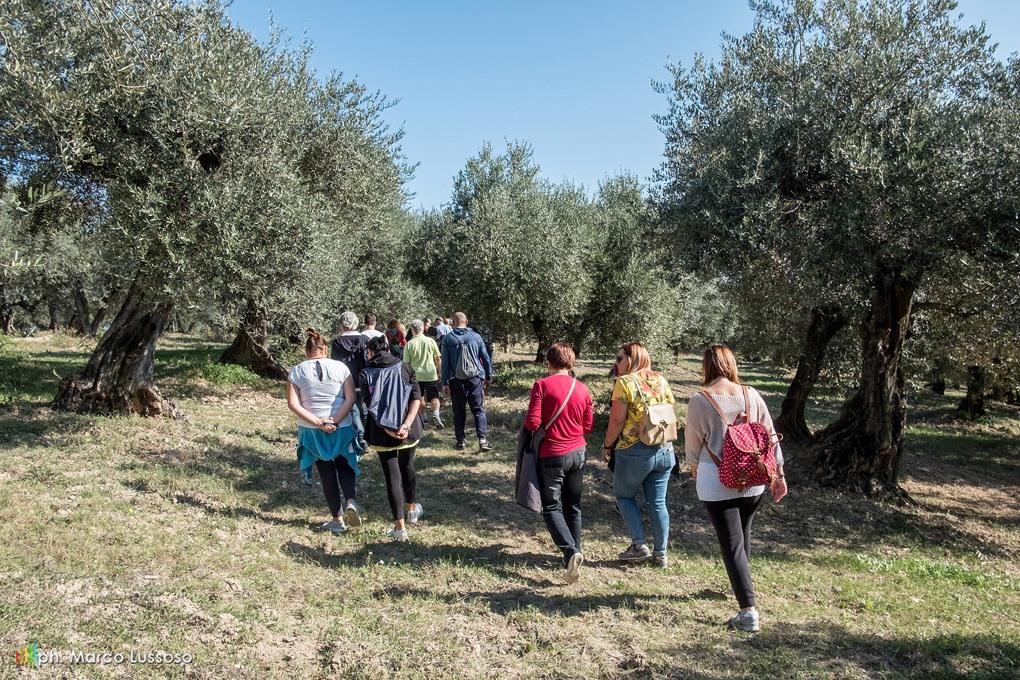 passeggiata tra gli. olivi