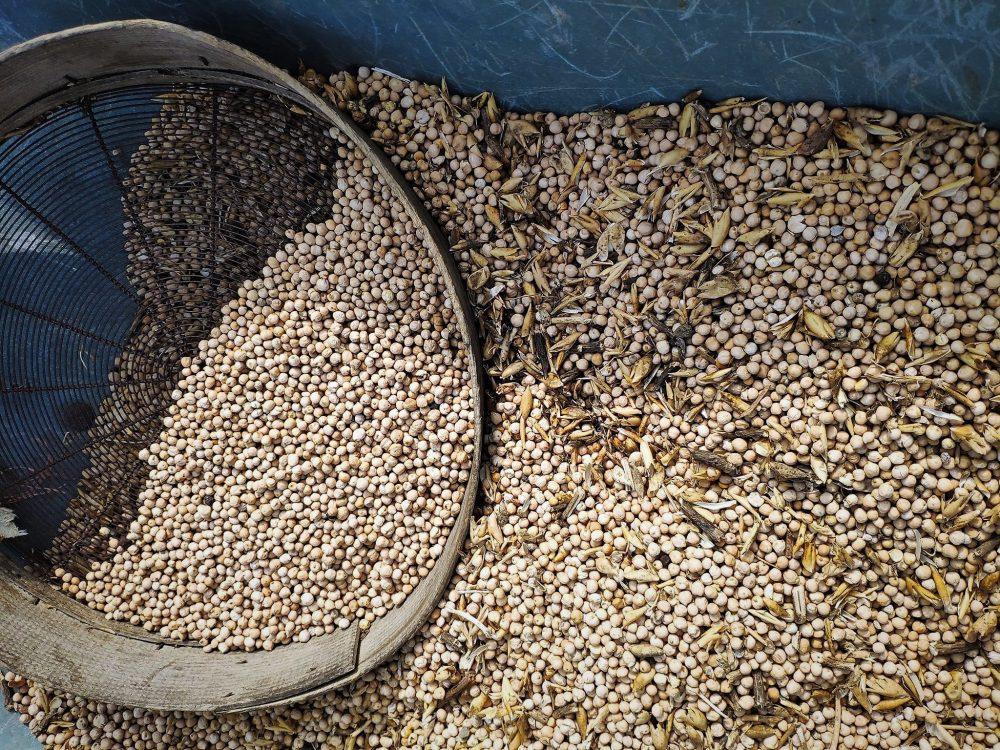 Masseria Del Sesto – Il cece di Teano