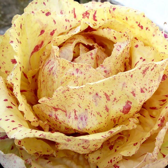 Insalatina di cappone con radicchio variegato di Castelfranco veneto igp, aceto balsamico e melograno