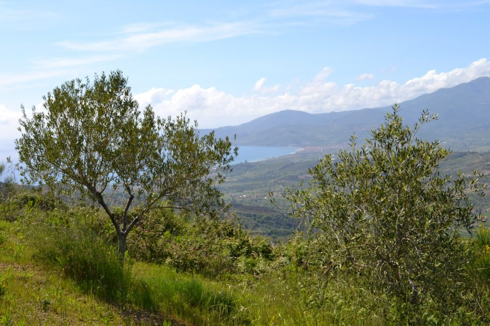 Macelleria Trama Luigi -olivi e mare