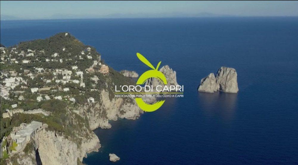Logo dellOlio Oro di Capri