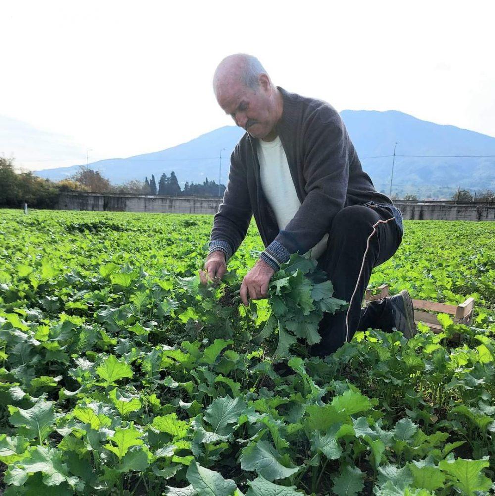 Antonio Manfellotto, Terra Viva Azienda Agricola