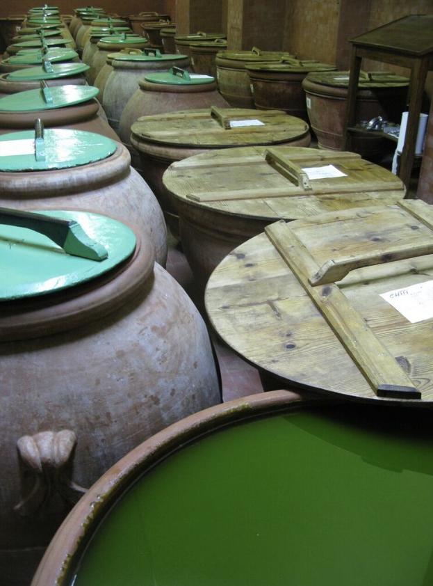 L'olio di Capezzana da cultivar di Moraiolo