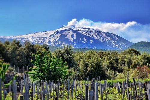 Etna - vigne