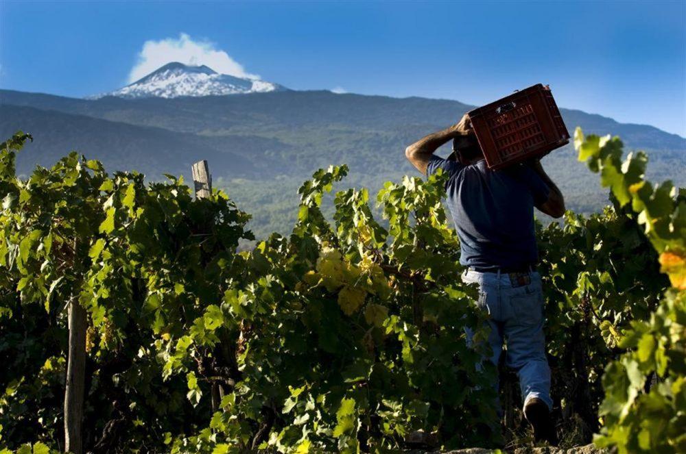 Etna - vini