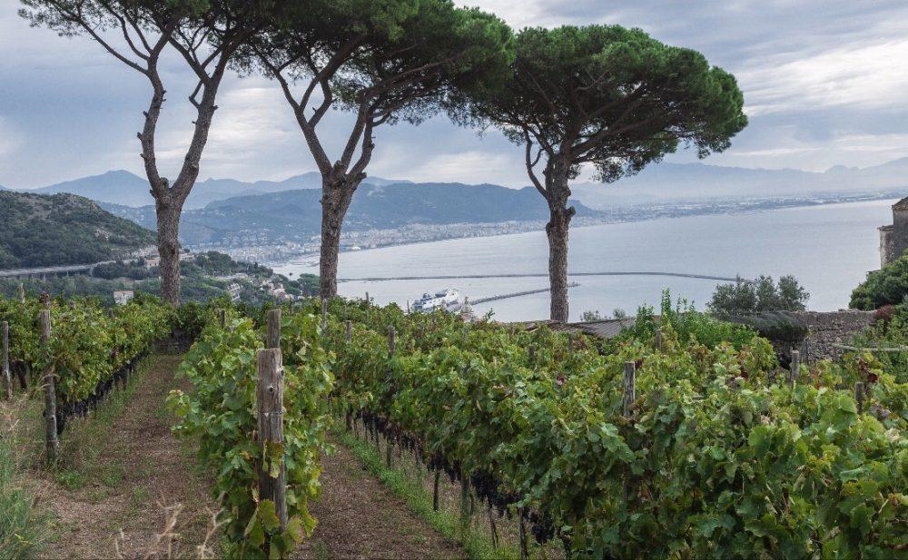 Le vigne di Patrizia