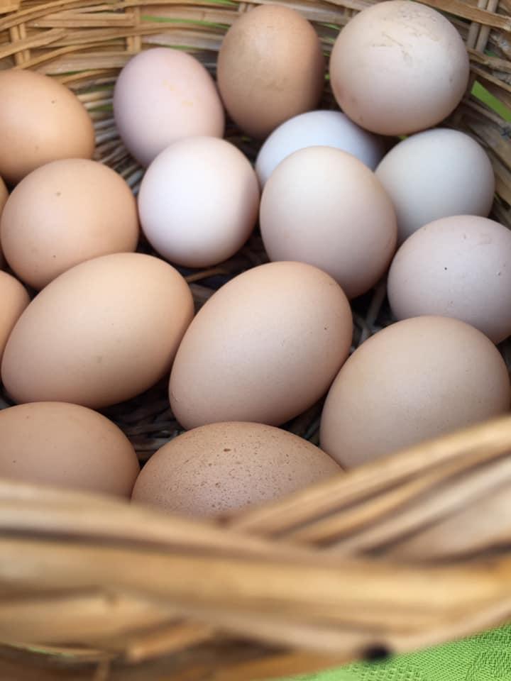 Rareche, le uova felici del Cilento