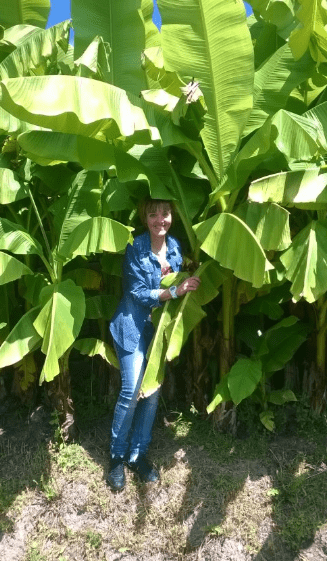 El Zeremia - Il bananeto