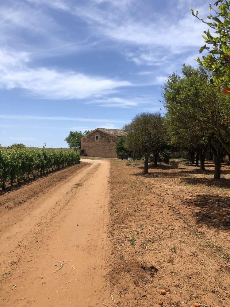 Azienda Santa Tresa Vittoria- Ragusa- Sicilia