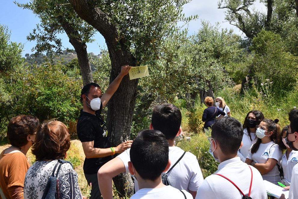 Olio Oro di Capri percorso sensitivo negli oliveti anacapresi