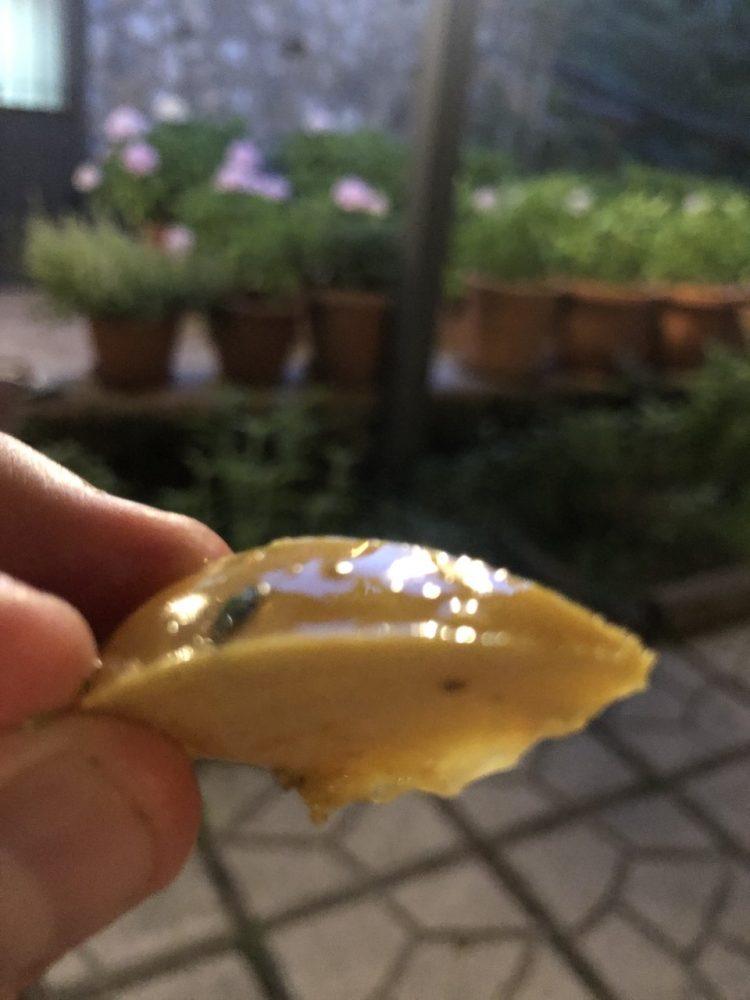 Il frescale - cachi sottolio