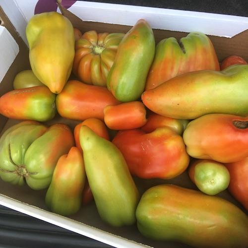 Pomodori De Antonis