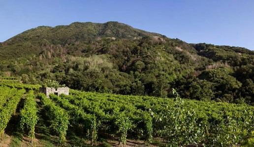 Il Monte Somma (foto Antonella Amodio)