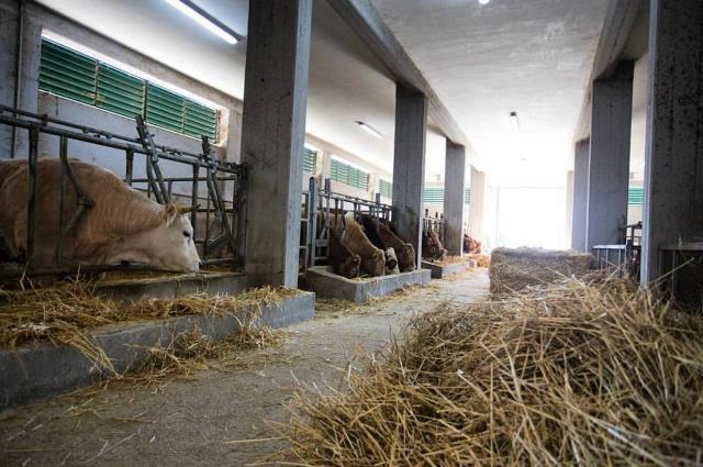 Azienda Agricola Taglienti - la stalla