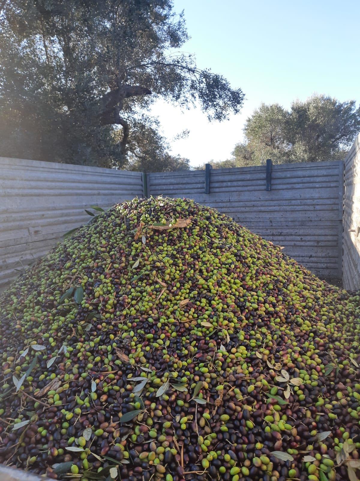 Olive Azienda Agricola Olio Febo