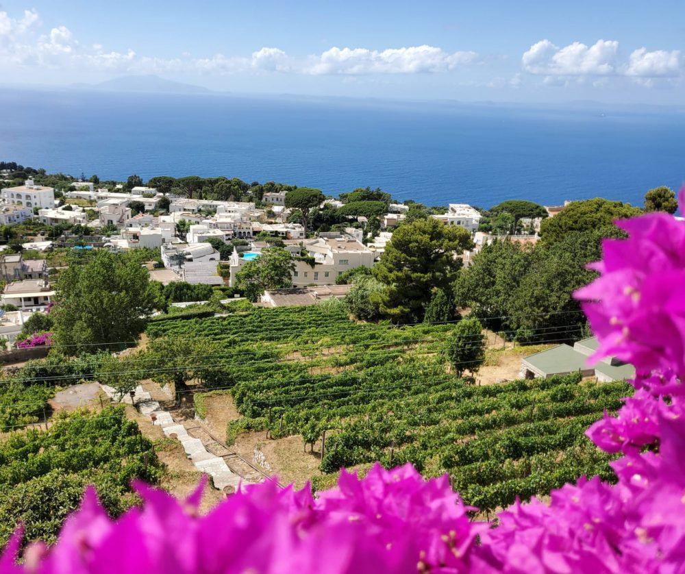 Solaria Capri