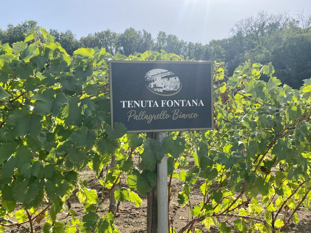 Tenuta Fontana - Vigna San Silvestro
