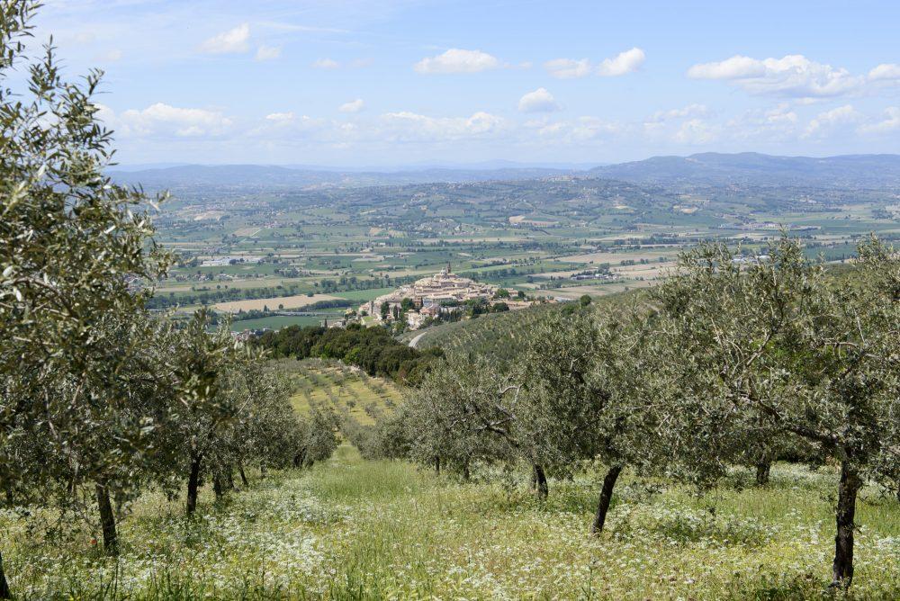 Uliveto, Trevi - Umbria